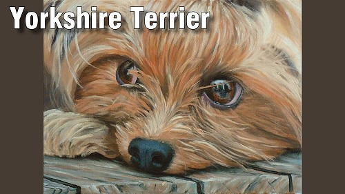 how to paint a yorkshire terrier dog in oil
