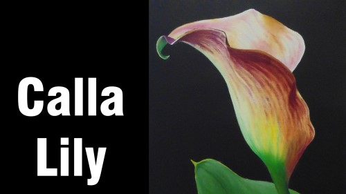 how to paint calla arum lily flowers