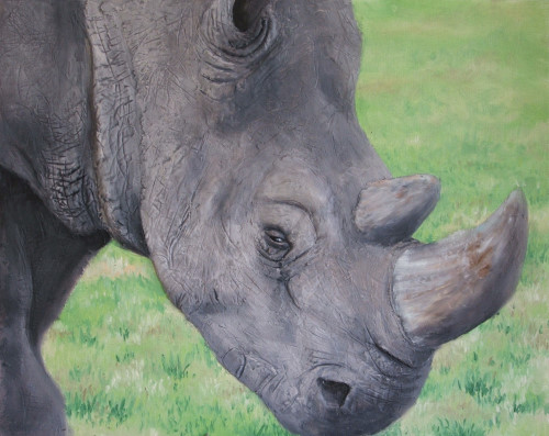 how to paint a rhino