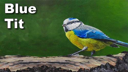how to paint birds blue tit