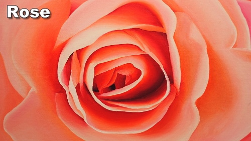 how to paint a rose in oil painting