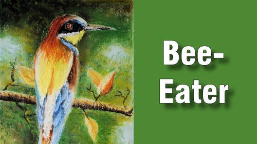 how to draw bee-eater pastel