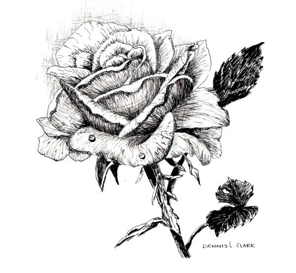 how to sketch a rose in pen and ink with Dennis Clark
