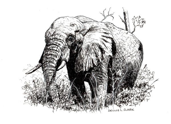 how to sketch an elephant in pen and ink