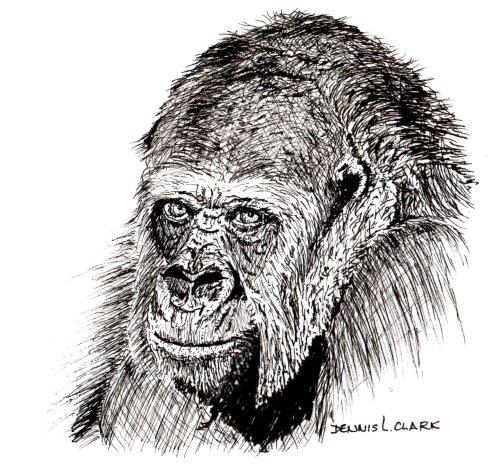 gorilla portait