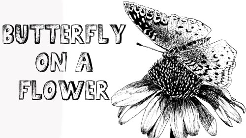 how to draw a butterfly on a flower pen and ink