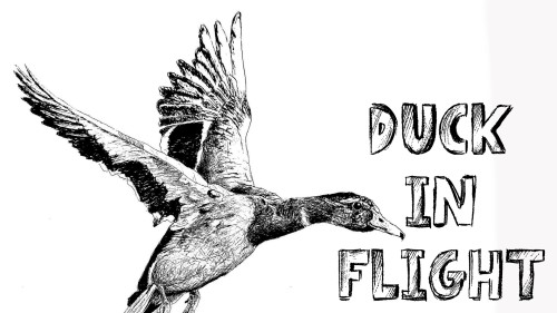 how to draw a duck in flight pen and ink