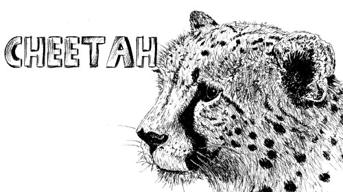 how to draw a cheetah pen and ink