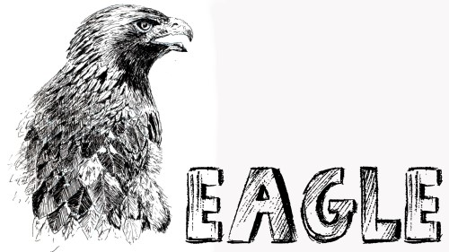 how to draw eagle pen and ink