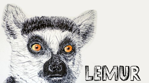how to draw a lemur pen and ink