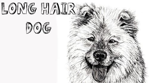 how to draw long haired dog pen and ink