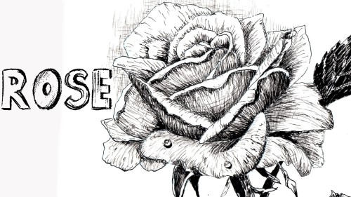 how to draw rose pen and ink