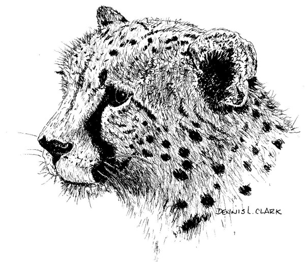 how to draw animals in pen and ink - cheetah