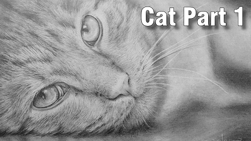 how to draw realistic cats