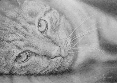 realistic cat drawing tutorial