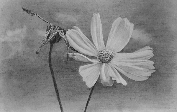 drawing flower tutorial