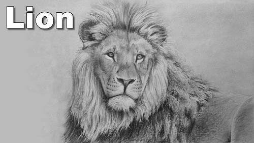 how to draw a lion pencil drawing tutorial