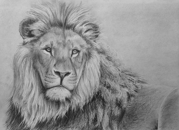 lion pencil drawing class tutorial lesson how to draw animals