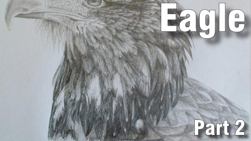 how to draw eagle pencil