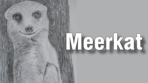 how to draw meerkat pencil