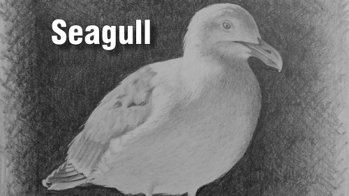 how to draw seagull pencil