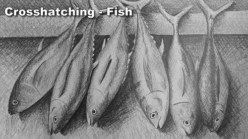 how to crosshatch fish draw fish