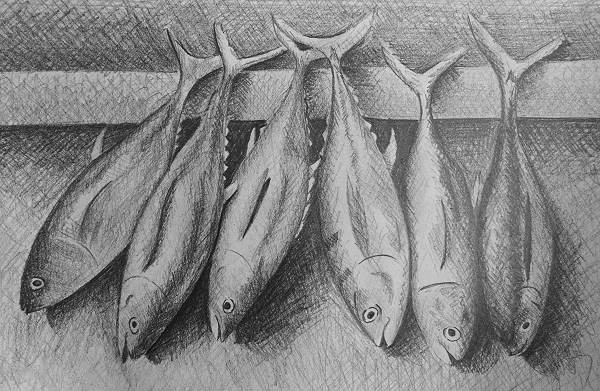 how to do crosshatching how to draw fish