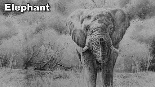 how to draw an elephant pencil drawing
