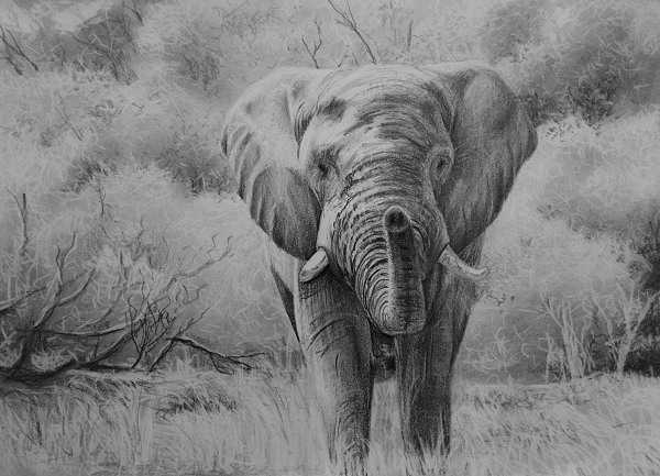 elephant drawing tutorial how to draw wild life big 5