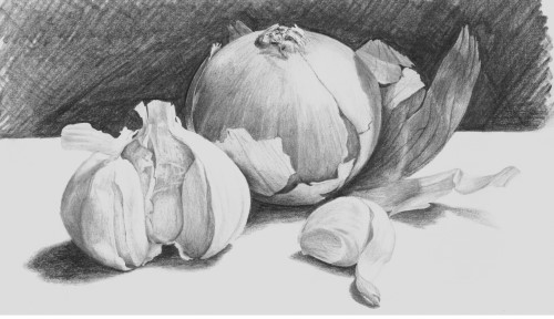 how to draw onions and garlic in pencil