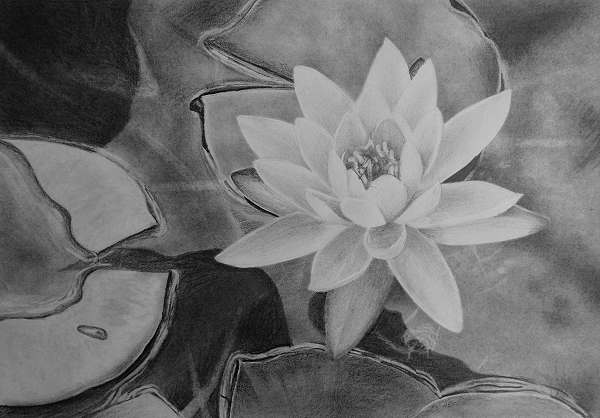 how to draw flowers water lilies