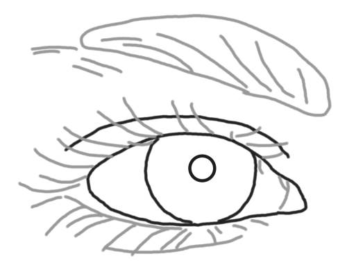 draw in the basic outlines of the eye