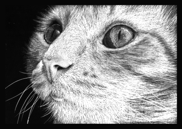 how to draw a realistic cat with scratchboard