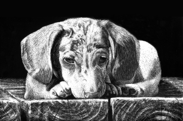 dog scratchboard drawing tutorial