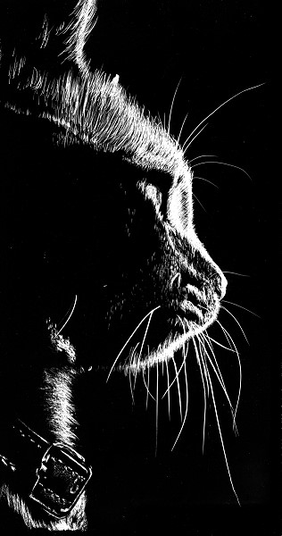how to draw a cat in silhoette with scratchboard