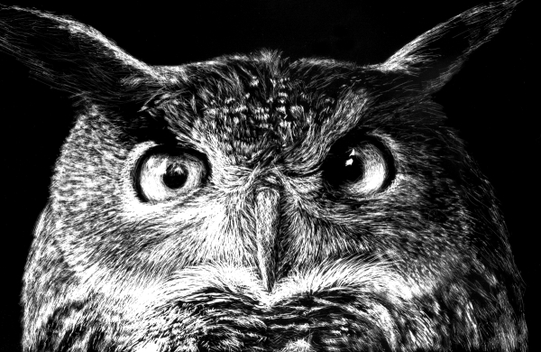 scratchboard owl drawing tutorial