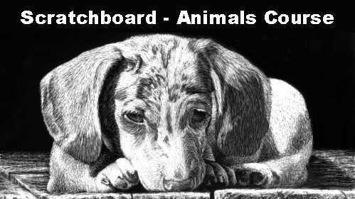 scratchboard animal drawing course