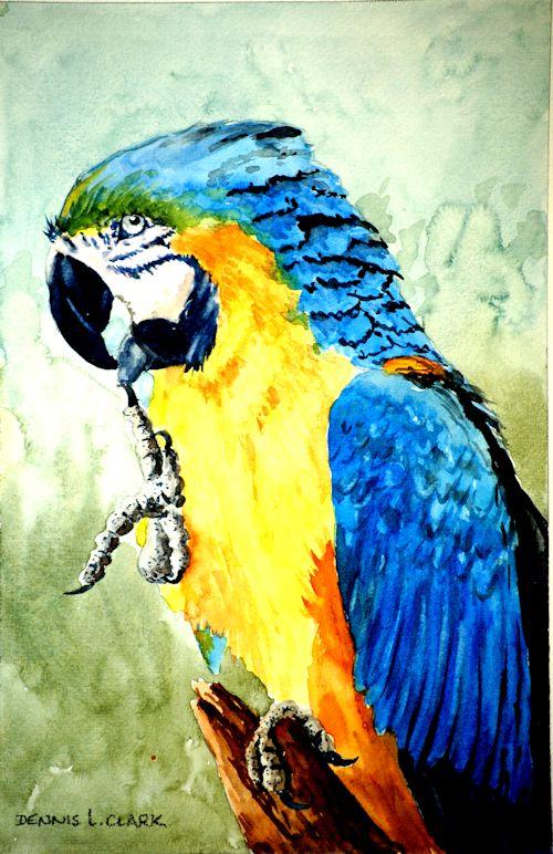 parrot splendour