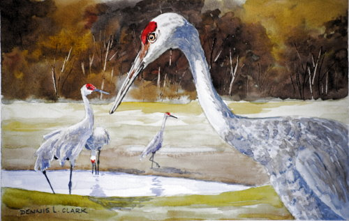 red crested cranes