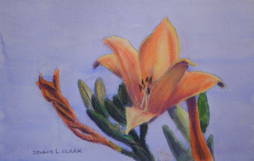 Day lily_pastel