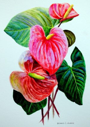 how to paint anthuriums in watercolor