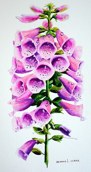 advanced watercolor painting course - how to paint foxgloves