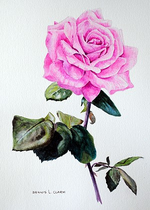 realistic watercolor flower painting tutorial - rose