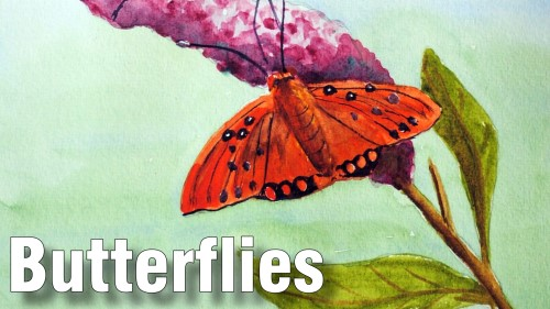 how to paint butterflies watercolour