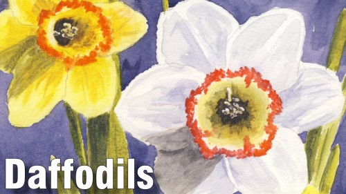 how to paint daffodils watercolour