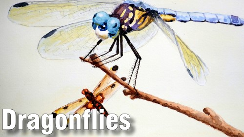 how to paint dragonflies watercolour