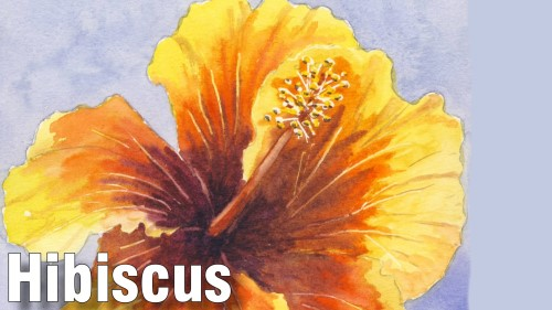 how to paint hibiscus watercolour