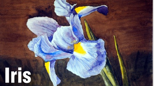 how to paint moss iris watercolour