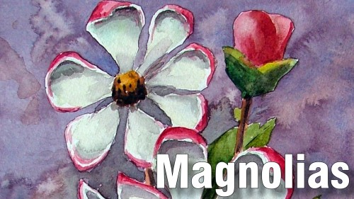 how to paint magnolias watercolour