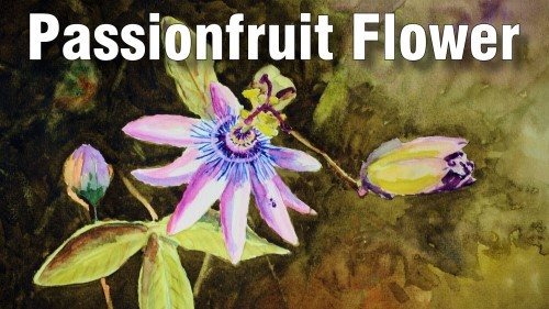 how to paint passionfruit flower watercolour